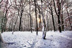 sonne und winter