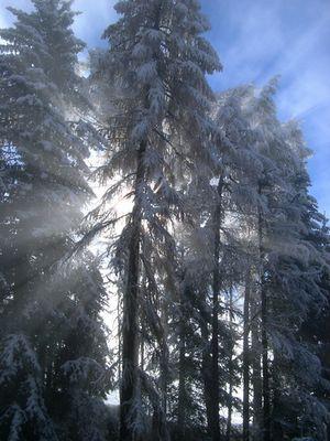 Sonne vs Nebel ...