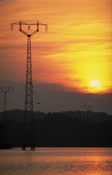 Sonne Wasser Vögel Abend Strommast