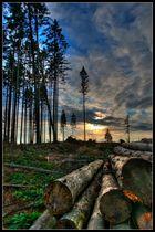 Sonne Wolken Bäume