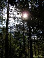 Sonne zwischen Bäumen
