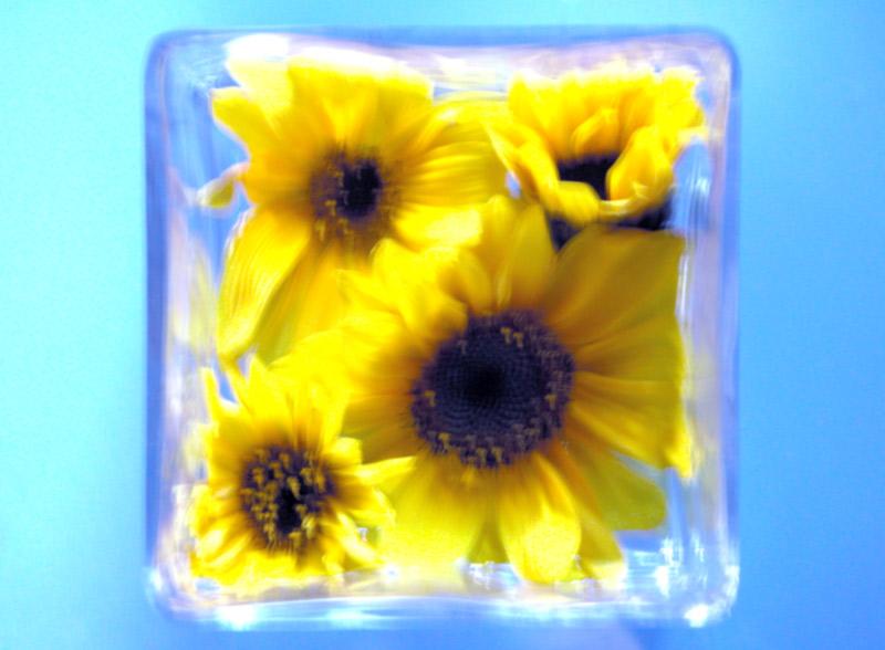 Sonneblumenschale