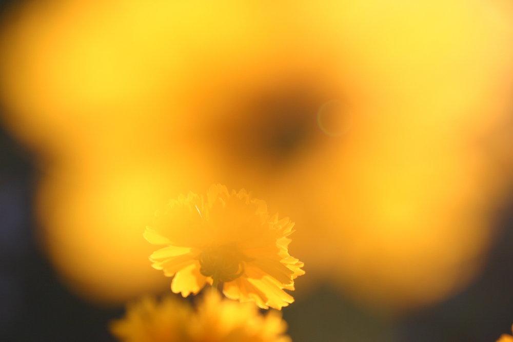 Sonnen-Auge