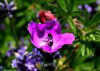 Sonnen in der Blume