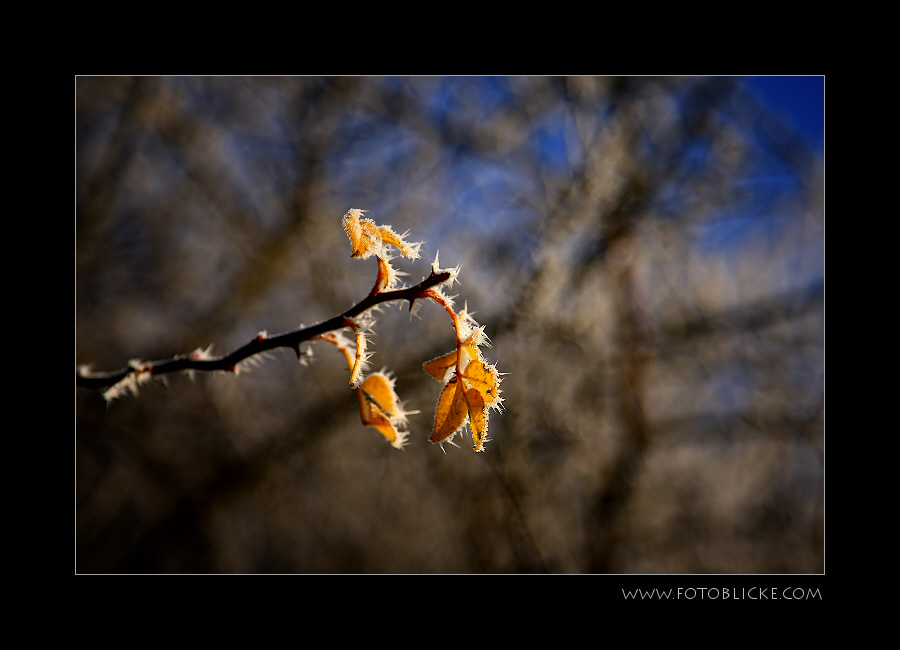 Sonnen Kälte
