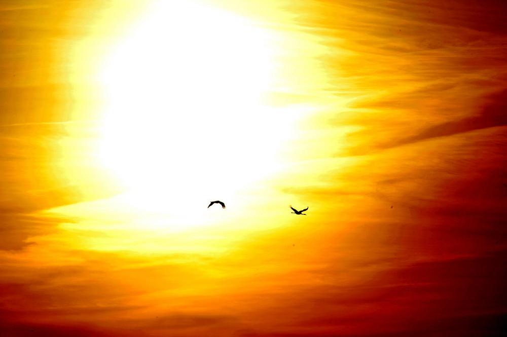 Sonnen-Kraniche