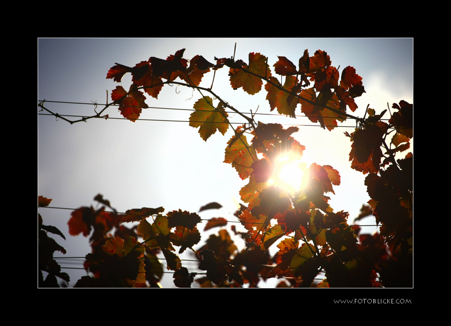 Sonnen Licht