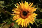 Sonnen - Mittwochs - Blümchen