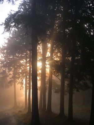 Sonnen-Nebel