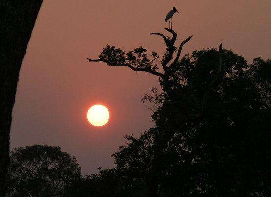 Sonnen-untergang im Pantanal, Brasilien