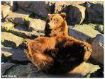 Sonnenanbeter-Bär