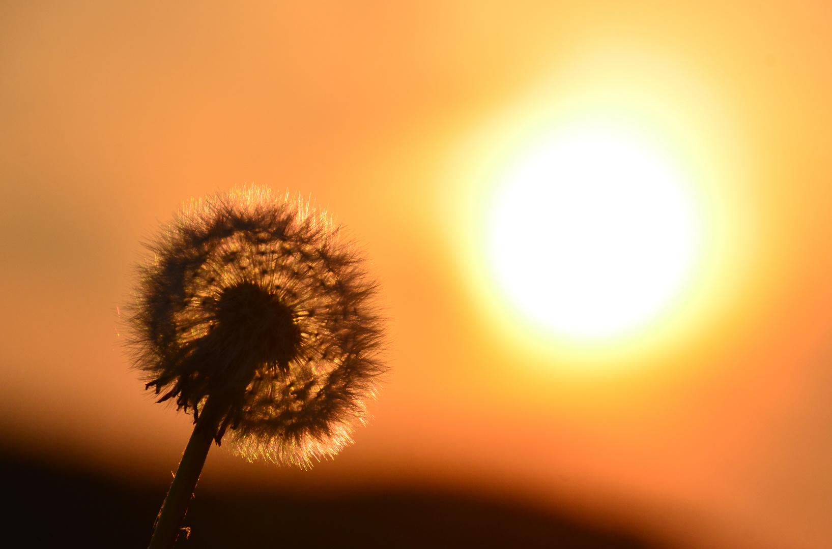 Sonnenanbeter