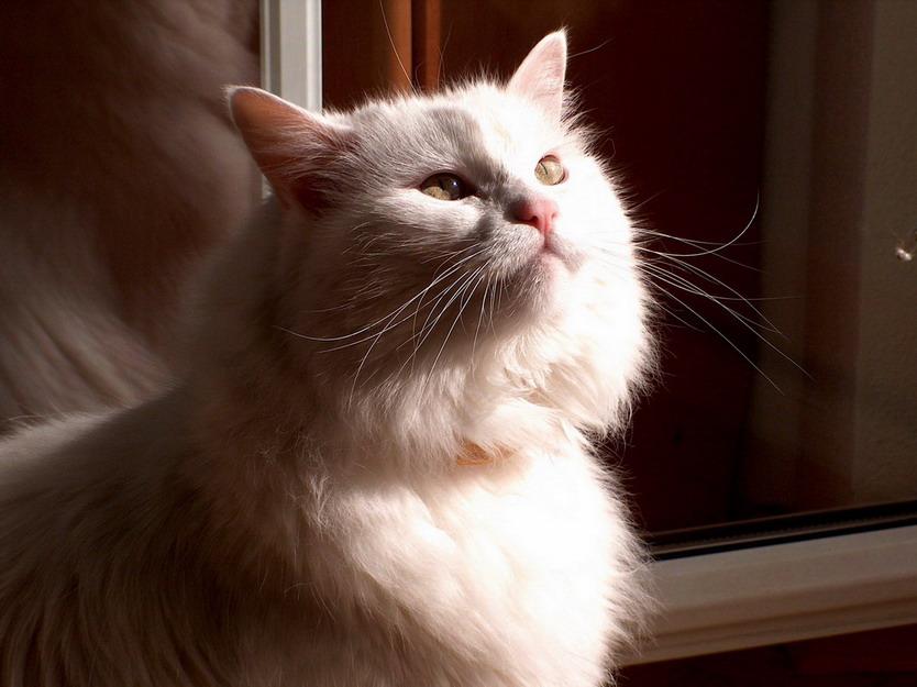 Sonnenanbetung