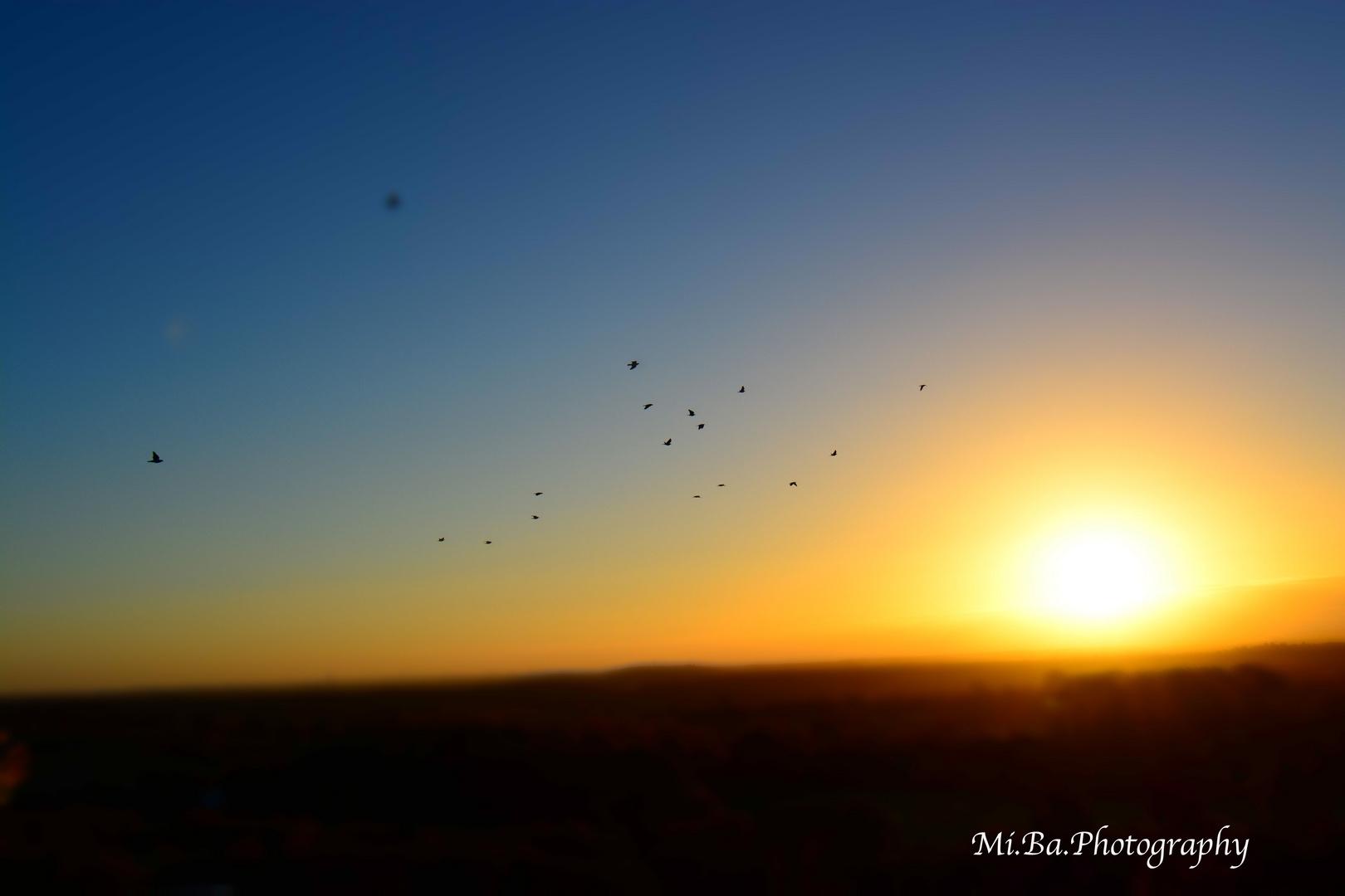 Sonnenaufgänge von der Bismarksäule