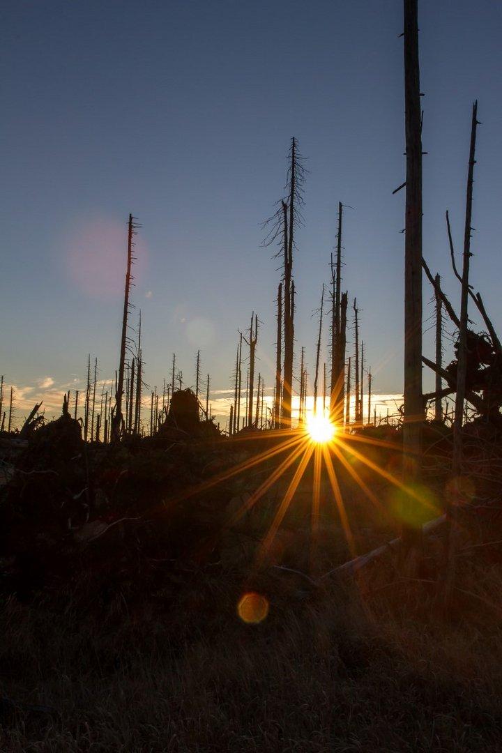 Sonnenaufgang am Dreisessel