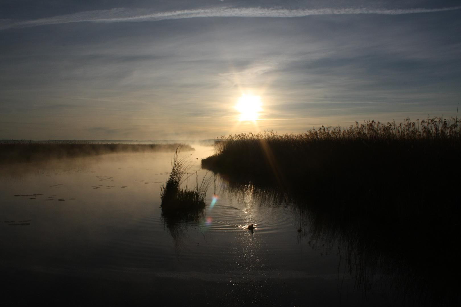 Sonnenaufgang am Federsee 6