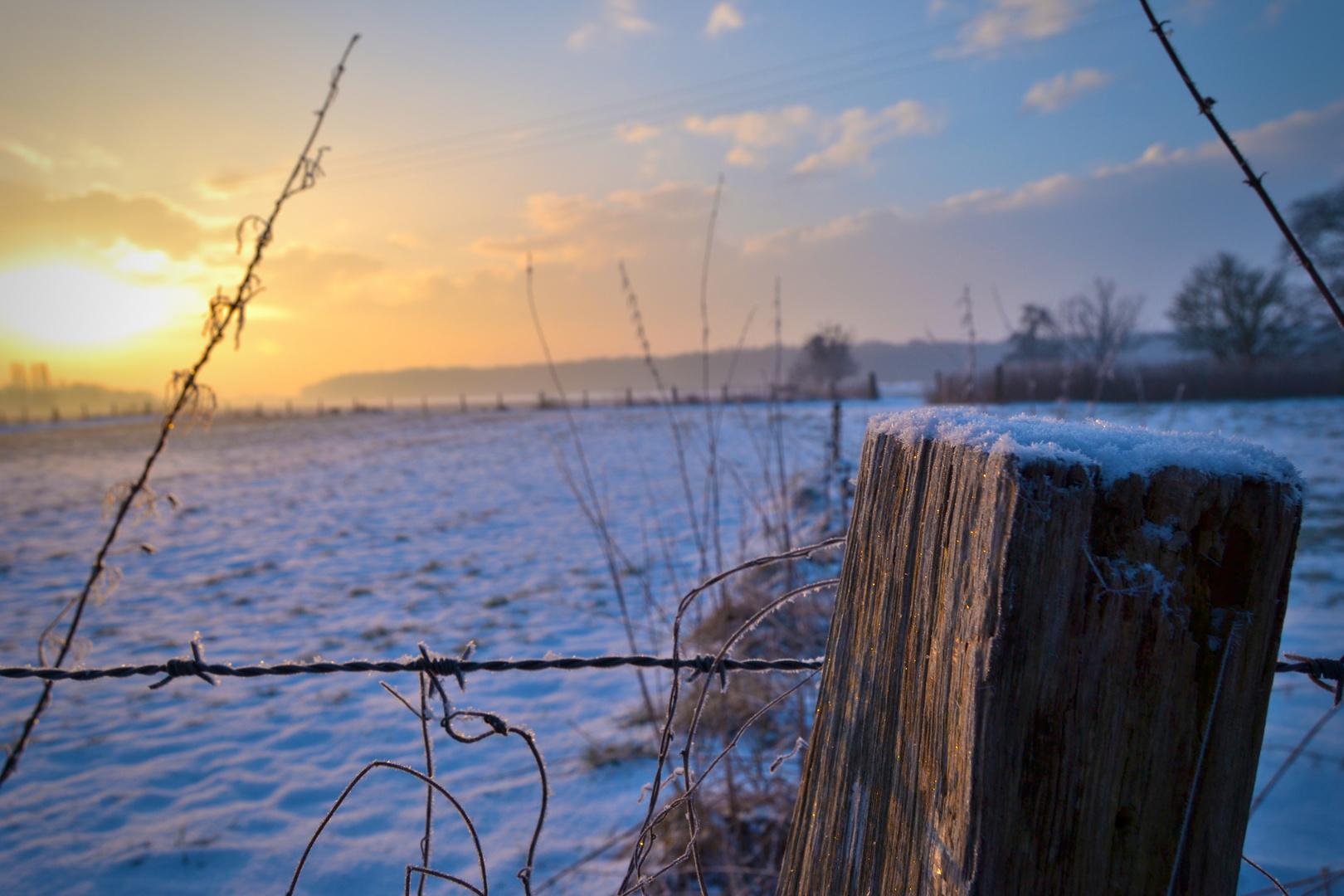 Sonnenaufgang am Feldrand
