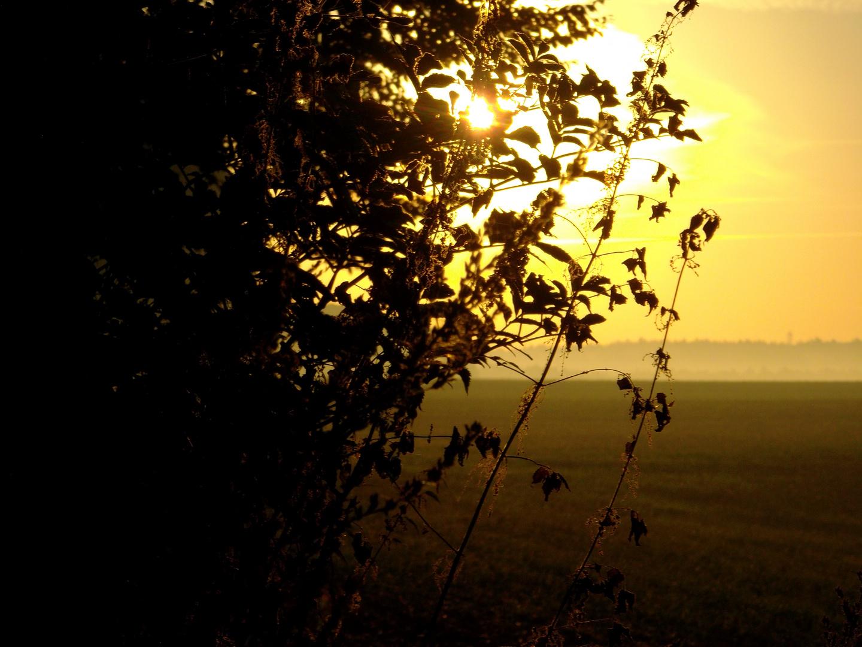 Sonnenaufgang am Haard Grenzweg