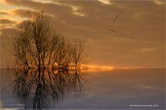 Sonnenaufgang am linken Niederrhein bei  -10 Grad