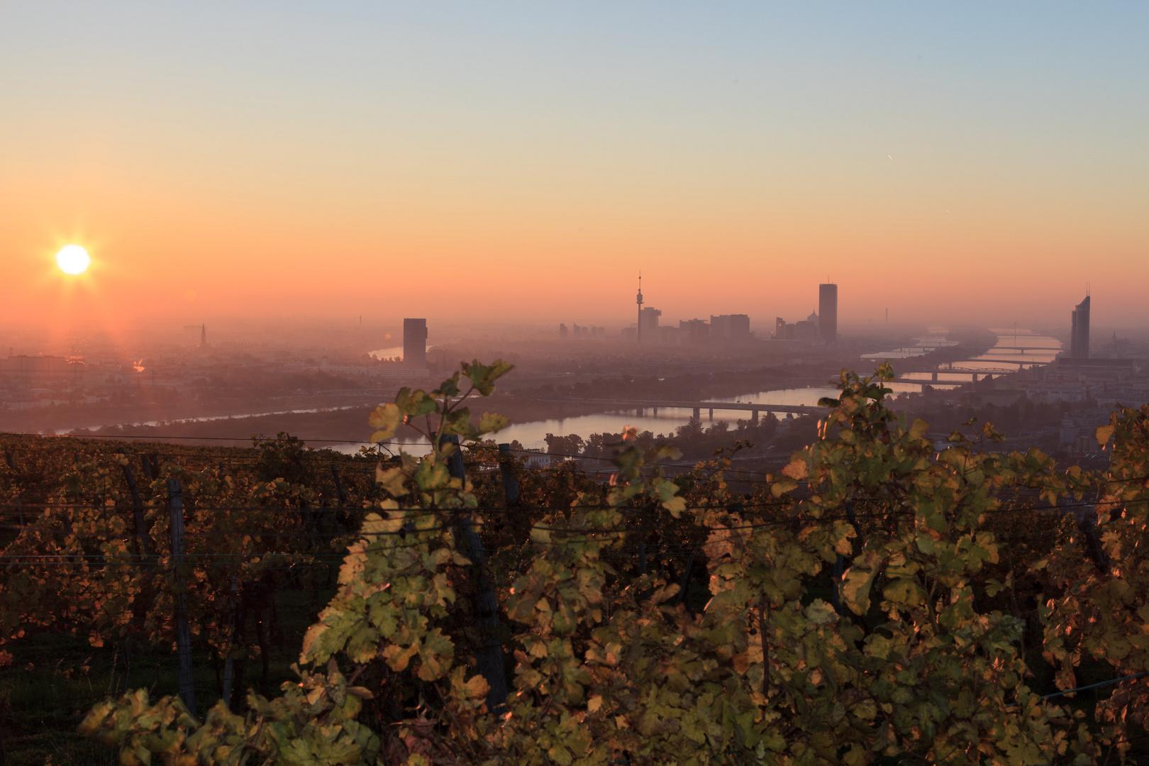 Sonnenaufgang am Nussberg, Wien