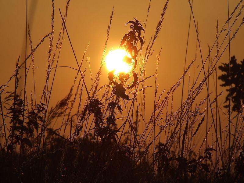 Sonnenaufgang an einem Junimorgen