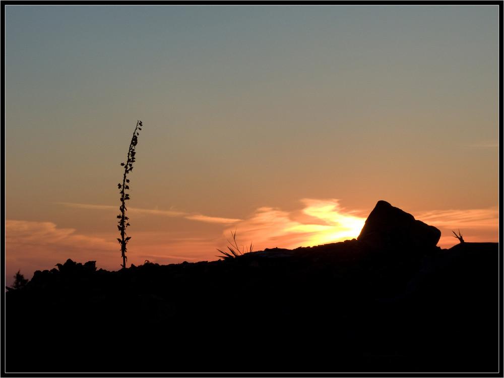 Sonnenaufgang auf der Hochheide