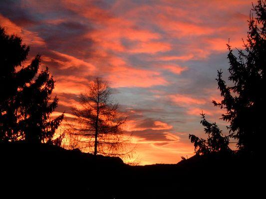 Sonnenaufgang Dezember 2003 Baum