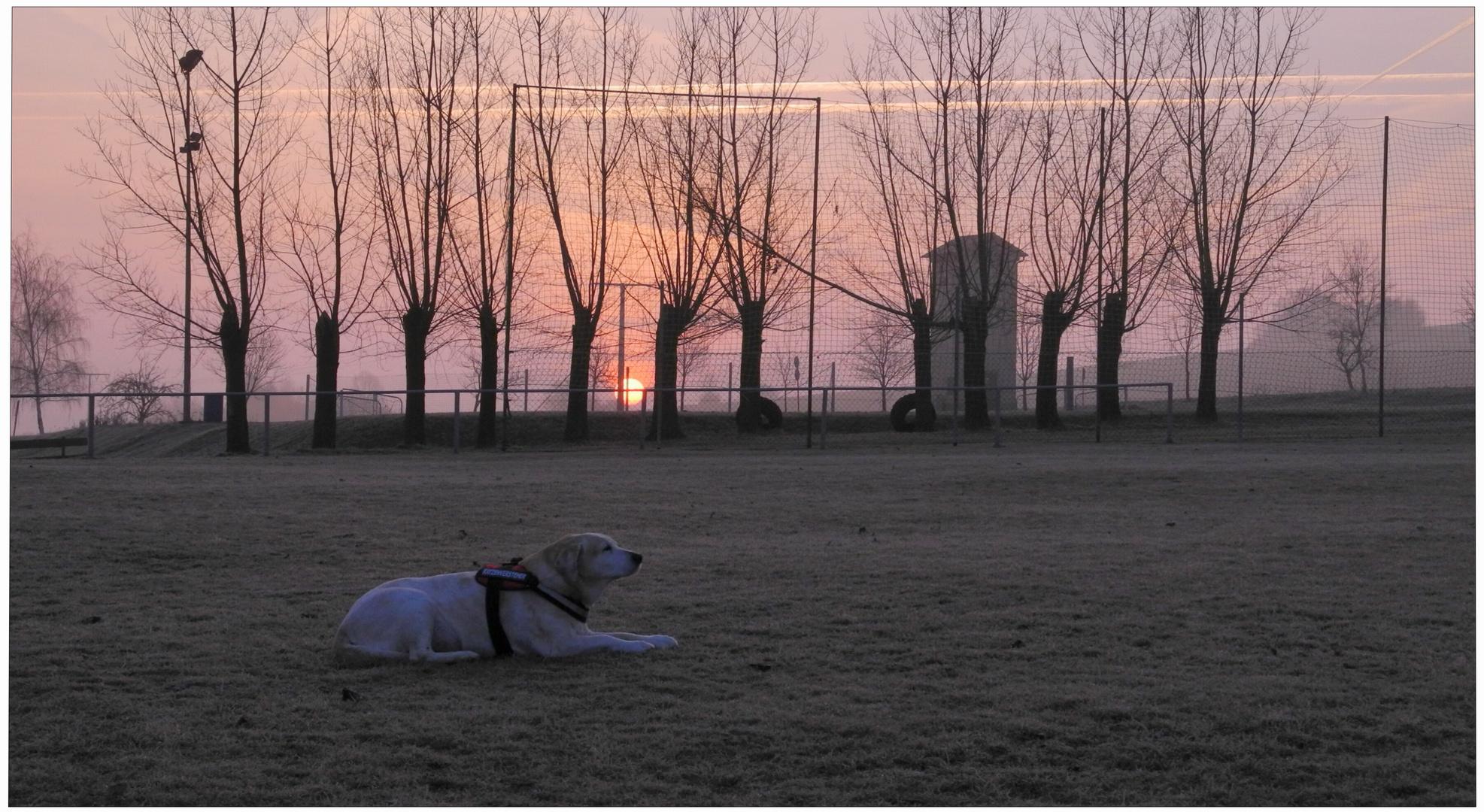 Sonnenaufgang für meine Bonnie (salida del sol para mi Bonnie)
