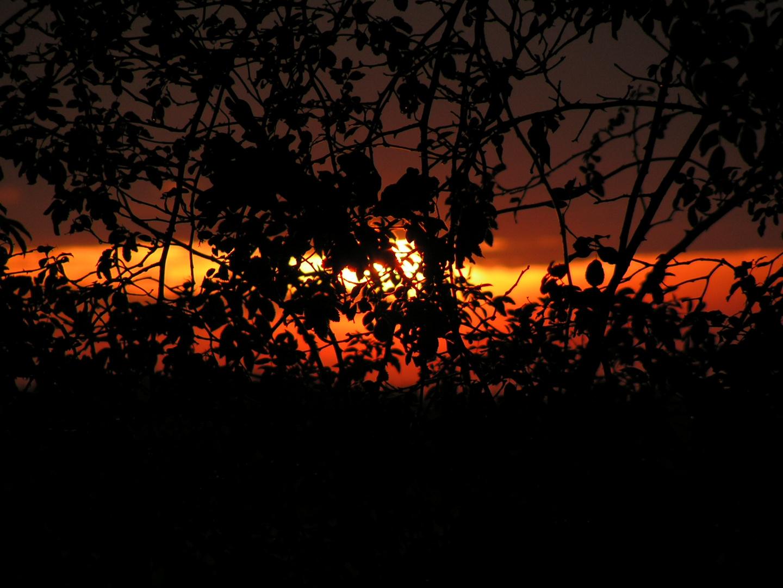 Sonnenaufgang hinter dem Gebüsch