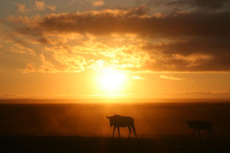 Sonnenaufgang im Amboseli Nationalpark
