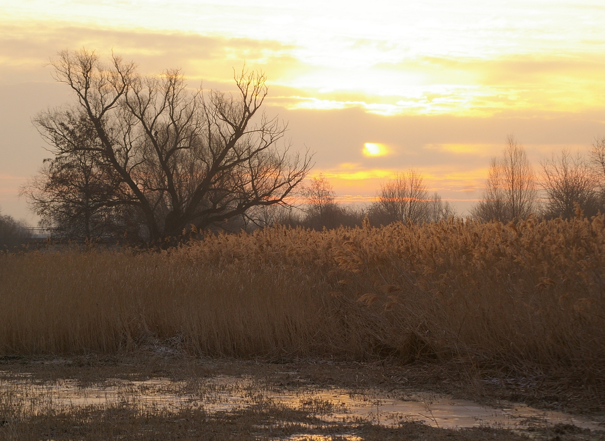 Sonnenaufgang im Biberschutzgebiet