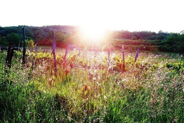 Sonnenaufgang im Burgenland