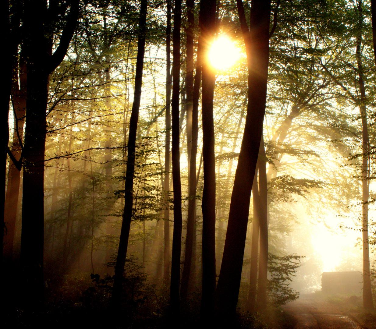 Sonnenaufgang im Frühling