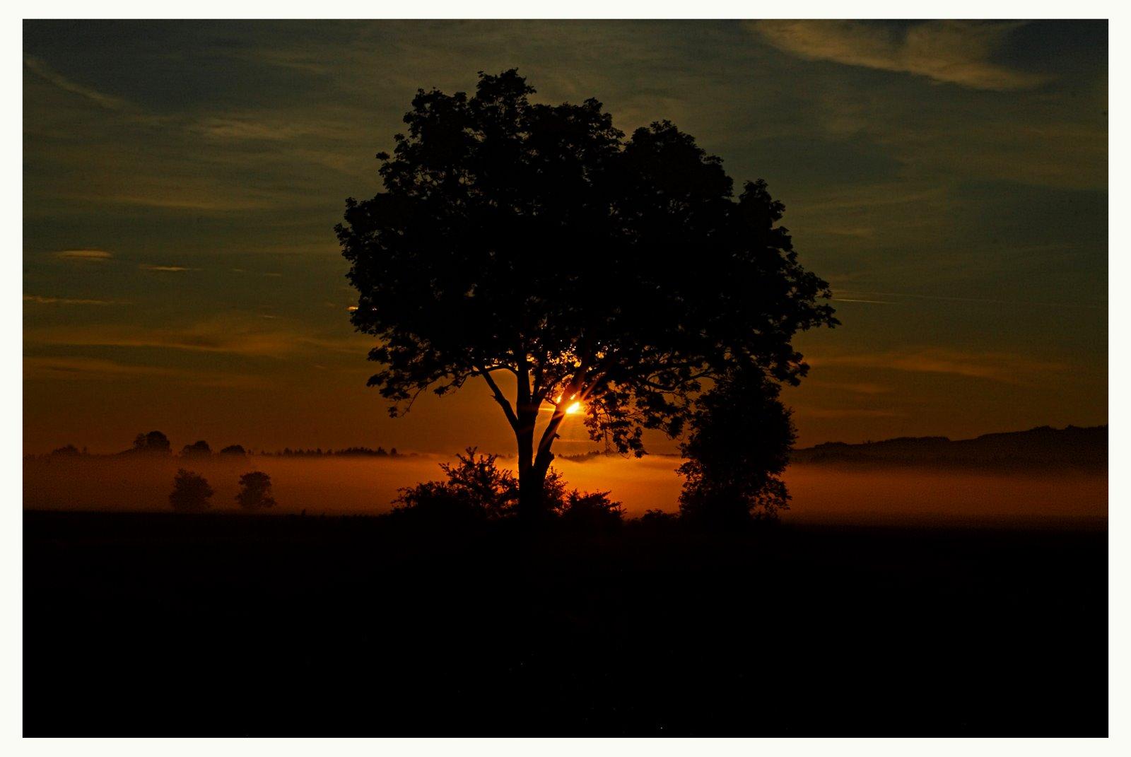 Sonnenaufgang im Haarmoos