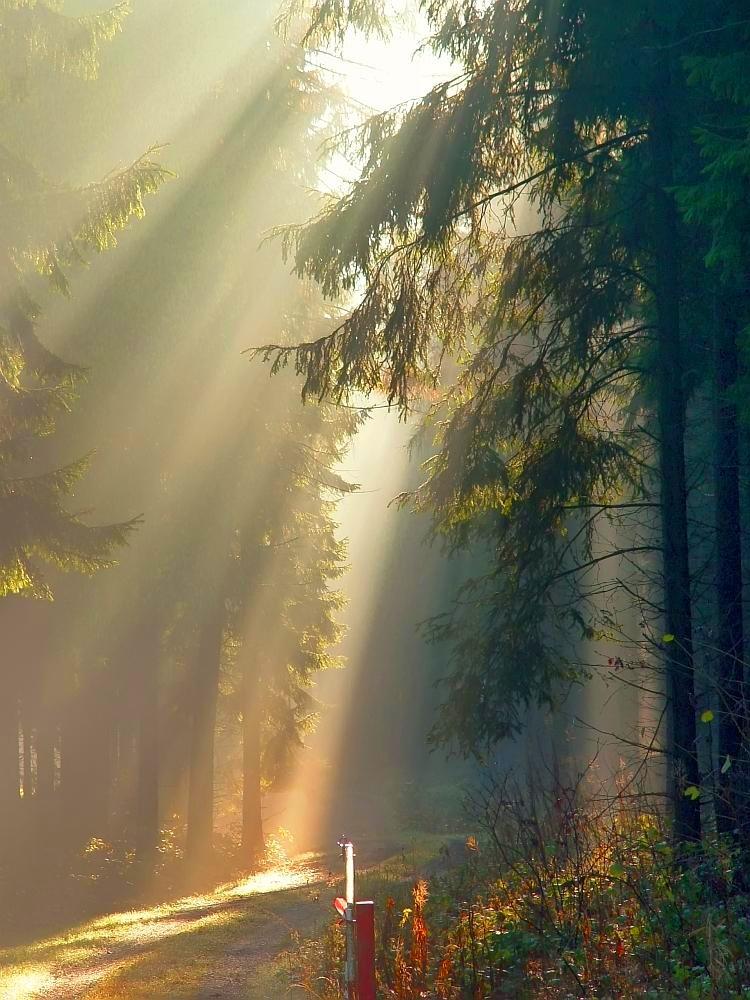 Sonnenaufgang im Hirschgrund bei Hinterrod 01