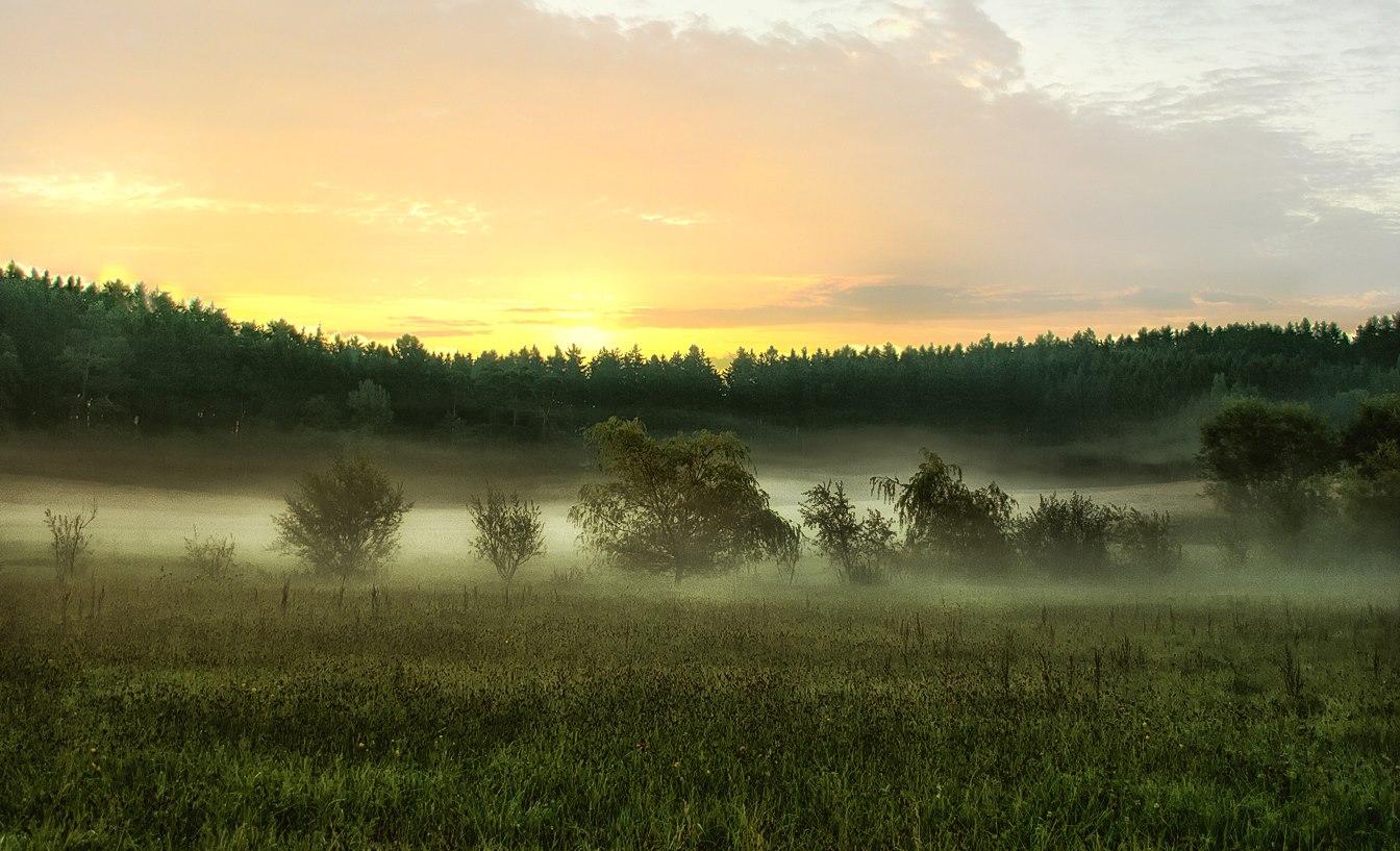 Sonnenaufgang im Holzland
