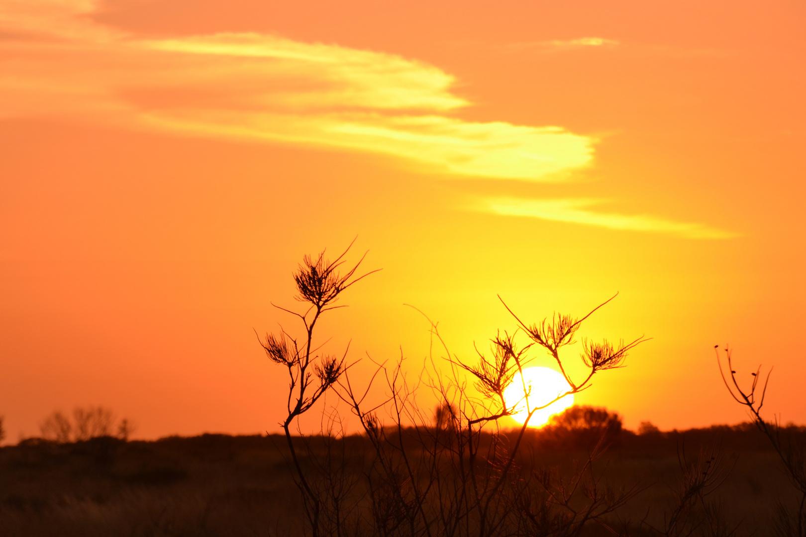 Sonnenaufgang im Kata Tjuta NP