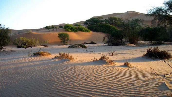 Sonnenaufgang im Kuiseb Revier-Namibia