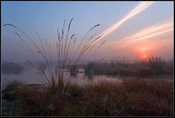 Sonnenaufgang im Moor