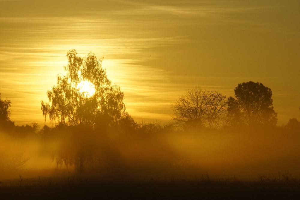 Sonnenaufgang im Moos ...