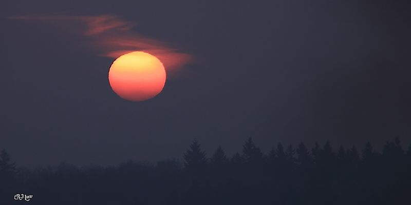 Sonnenaufgang im Morgennebel!