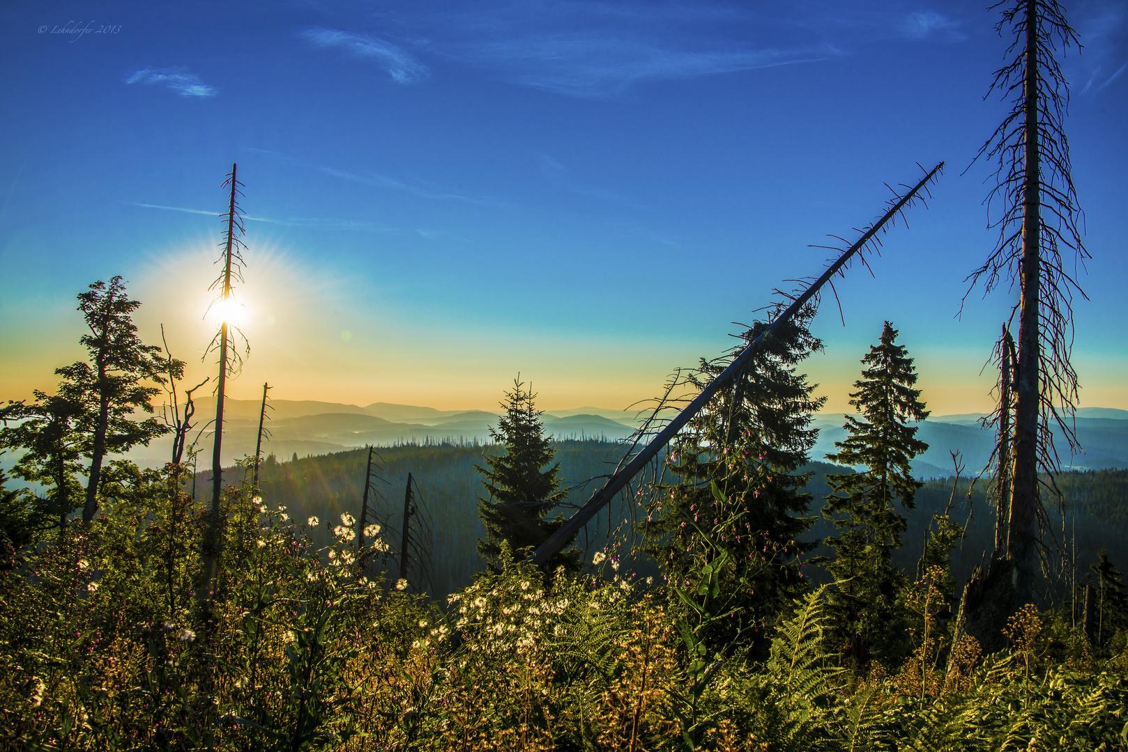 Sonnenaufgang im Nationalpark Bayerischer Wald