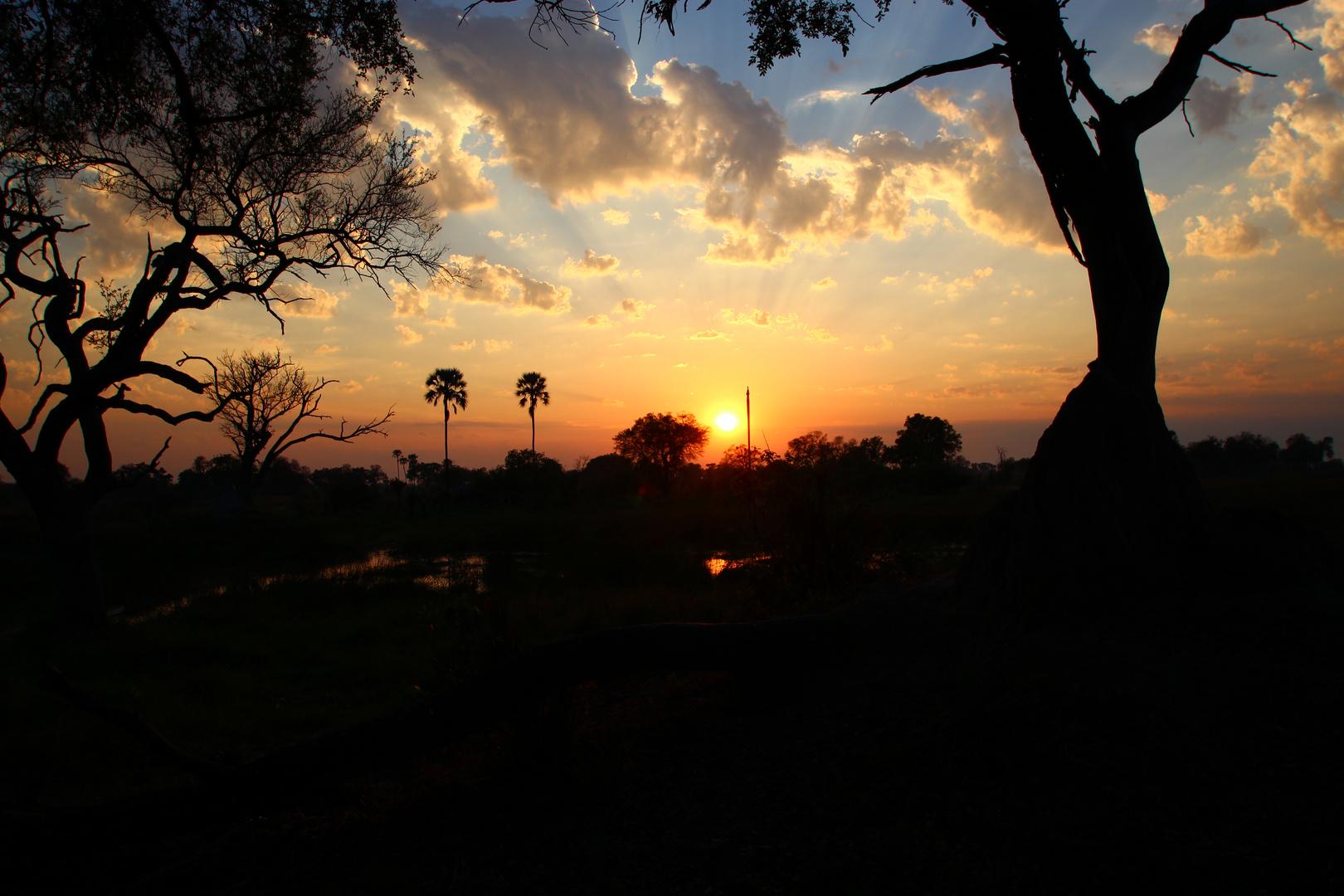 Sonnenaufgang im Okawango-Delta