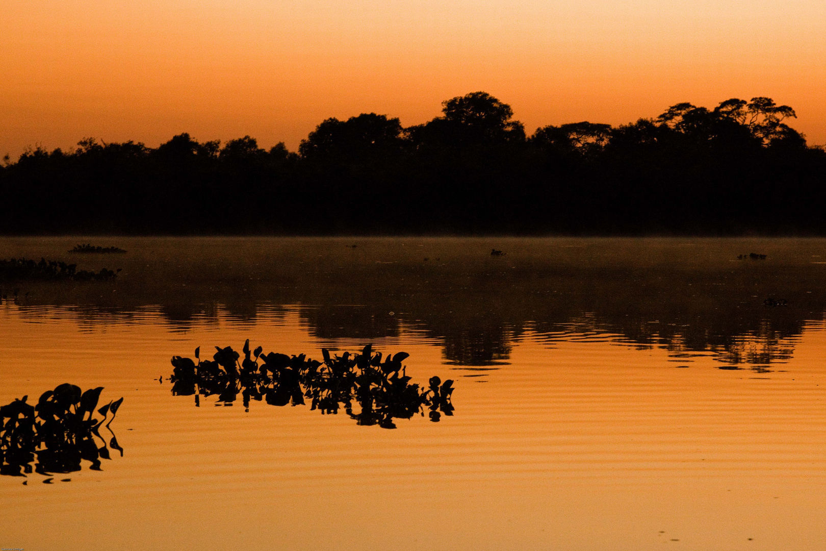 Sonnenaufgang im Pantanal II