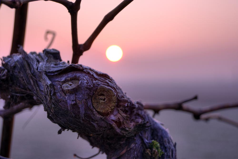 Sonnenaufgang im Rebstöckl