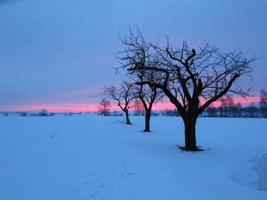 Sonnenaufgang im Schnee (3)