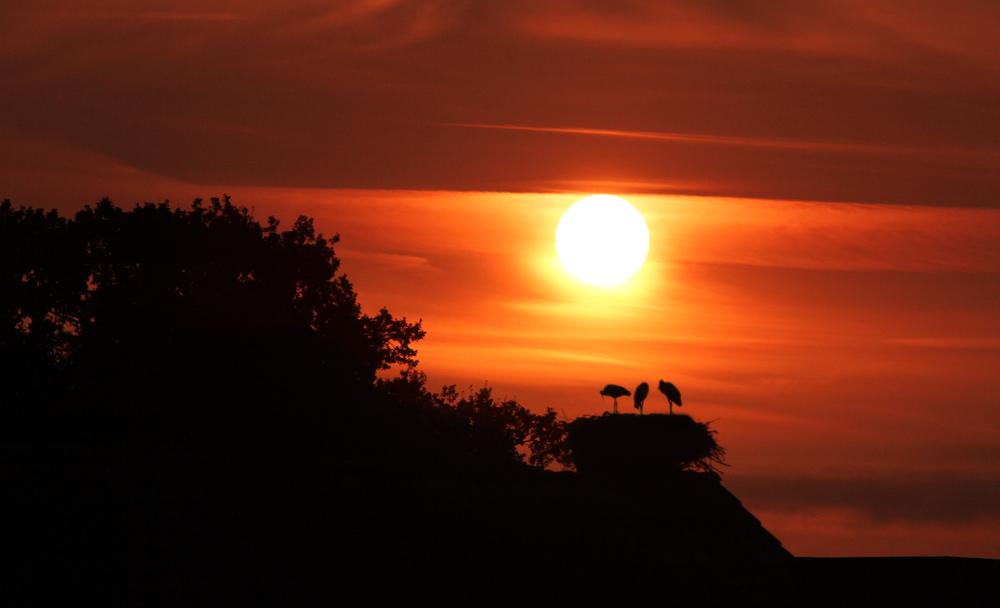 Sonnenaufgang im Storchendorf Rühstädt