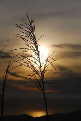Sonnenaufgang in BachMa