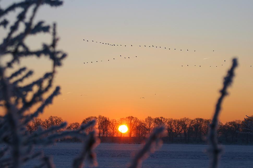 Sonnenaufgang in den Rurauen
