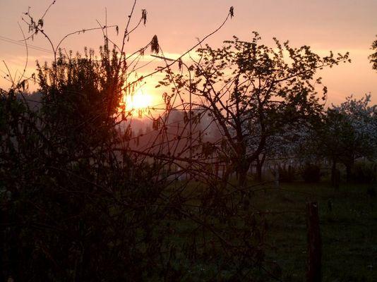 Sonnenaufgang in der Blüte